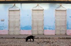 Cobbled street  black dog - cuba Royalty Free Stock Image