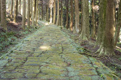 Cobbled way in forest Royalty Free Stock Photo