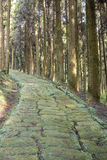 Cobbled way in forest Royalty Free Stock Photography