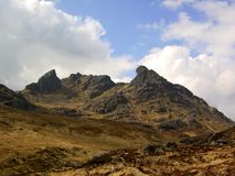 The Cobbler Stock Images