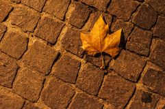Cobbles and dead leaf at night. In Pezenas, France stock photos
