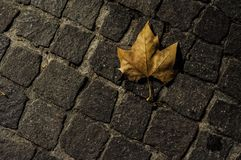 Cobbles and dead leaf at night. In Pezenas, France stock photography