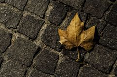 Cobbles and dead leaf at night. In Pezenas, France royalty free stock image