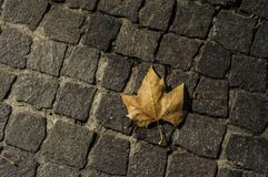 Cobbles and dead leaf at night. In Pezenas, France royalty free stock images