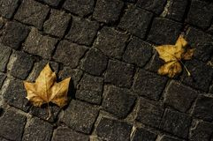 Cobbles and dead leaves at night. In Pezenas, France royalty free stock image