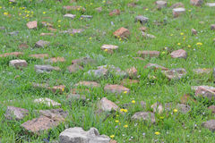 The cobbles in the grass. Backdrop Stock Images