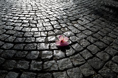 Cobbles on Spring Royalty Free Stock Images