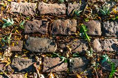 A cobblestone background with fallen leaves royalty free stock images