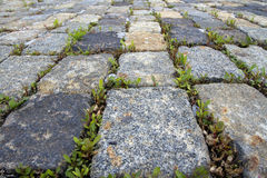 Cobblestone background with sprouted grass Stock Photo