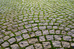 Cobblestone with grass bricks showing perspective. stock images