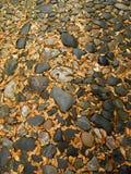 Cobblestone leaves Stock Images