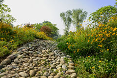 Cobblestone path in flowering daisies of sunny summer morning Royalty Free Stock Photos