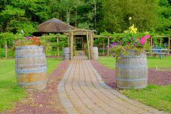 Cobblestone Path to Grape Arbor. A cobblestone path leads to a grape arbor and is flanked by wine barrels holding colorful flowers Royalty Free Stock Images
