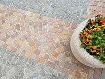 Cobblestone pattern with flowers Royalty Free Stock Photos