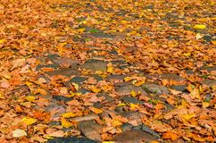 Cobblestone pavement with autumn leaves. The concept of changing the season. Autumn day. Vintage style stock images