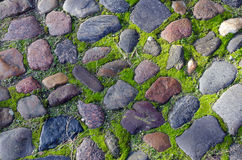 Cobblestone. Pavement with moss on boards Royalty Free Stock Images