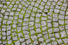 Cobblestone pavement overgrown with moss Stock Photography