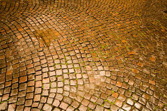 Cobblestone pavement in Verona Stock Image