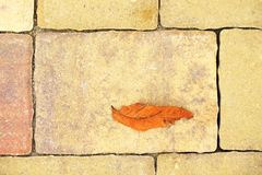 Cobblestone paving footpath with autumn dry colorful leaves, concrete cobbles Stock Photography
