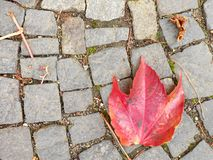 Cobblestone paving footpath with autumn dry colorful leaves, granite cobles Stock Photos