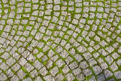 Cobblestone road close-up. Close-up of a cobblestone road in a park with grass and moss growing up between the stones royalty free stock photo