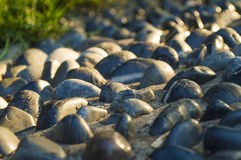 Cobblestone road close-up Stock Images
