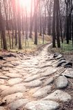 Cobblestone road going down. Sunset in forest.  Road of large stones stock photos
