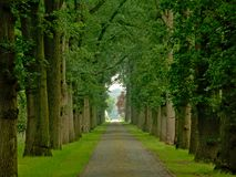 Cobblestone road with misty lanes of trees in a green spring forest in Kalmthout. Flanders stock images
