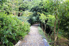Cobblestone road. Cobblestone way in the forest, amoy city, china Royalty Free Stock Photos