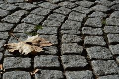 Cobblestone street abstract, yellow leaf royalty free stock photo