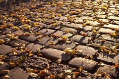 Cobblestone pavers  in autumn,leafes,colourful. Cobblestone street backlit in autumn with colourful leafes Royalty Free Stock Photo