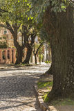 Cobblestone Street in San Isidro Buenos Aires. Peaceful urban scene with cobblestone street and trees in the elegant municipality of San Isidro in Buenos Aires Royalty Free Stock Photo