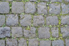 Cobblestone street surface with weeds stock photo