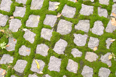Cobblestone Texture. A cobblestone with moss texture background image Royalty Free Stock Image