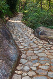 Cobblestone walking way in forest Stock Image