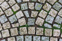 Cobblestone way texture Stock Images
