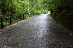 Cobblestoned alley in the forest Royalty Free Stock Photo