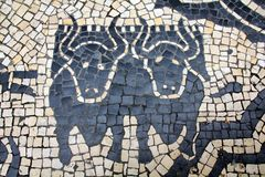 Cobblestones Bulls Stock Images