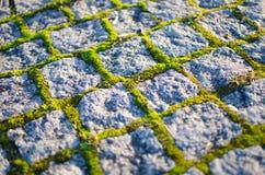 Cobblestones with moss Stock Photo