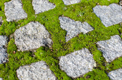 Cobblestones and moss Stock Photography