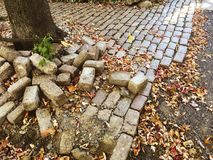 Cobblestones piled at base of tree on broken path background stock images