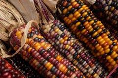 Cobbs do milho indiano Fotografia de Stock Royalty Free