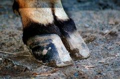 cobe πόδι Στοκ φωτογραφία με δικαίωμα ελεύθερης χρήσης