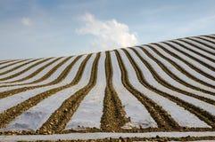 Coberta protetora sobre colheitas Fotos de Stock