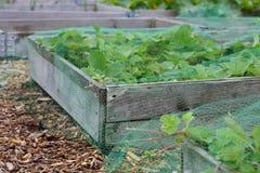 Coberto aumentou as camas vegetais em uma atribuição imagem de stock