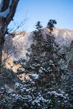 Coberto de neve na árvore na floresta imagens de stock royalty free