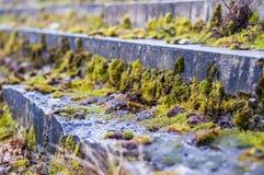 Coberto de vegetação com as etapas do musgo Imagens de Stock Royalty Free