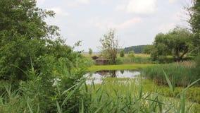 Coberto de vegetação com a lagoa das hortaliças filme