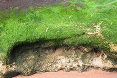 Coberto de vegetação pela pedra das algas Imagem de Stock