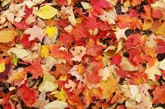 Cobertor das folhas fotos de stock royalty free